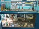 The St. Paul Island, Shipwrecks and Treasure Museum.